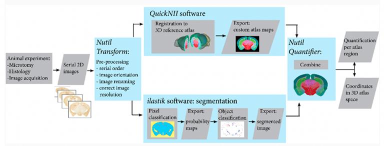 Navigate complex neuroanatomy and integrate neuroscience data using 3D brain atlases